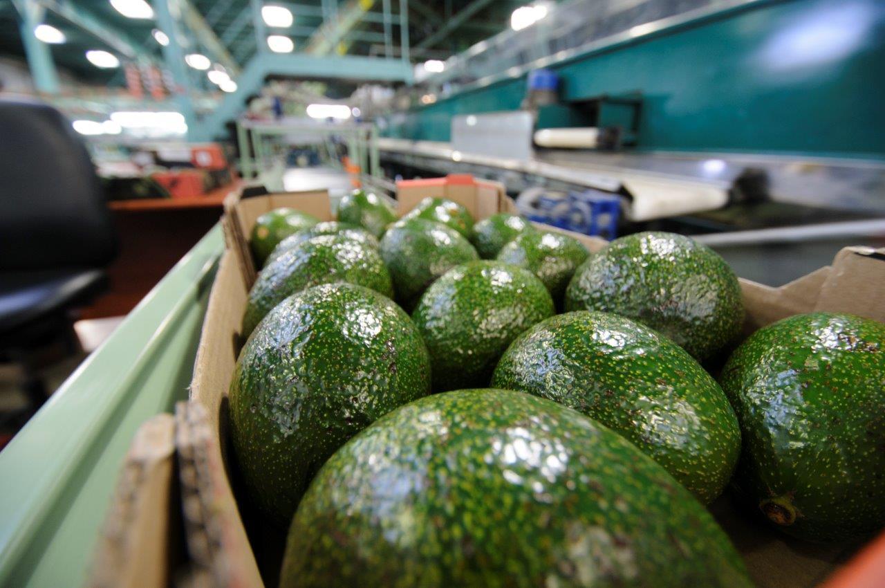 """מינוי חדש ב""""חקלאי גרנות"""" לירון ברזילי מונתה למנהלת שרשרת האספקה של """"חקלאי גרנות"""""""