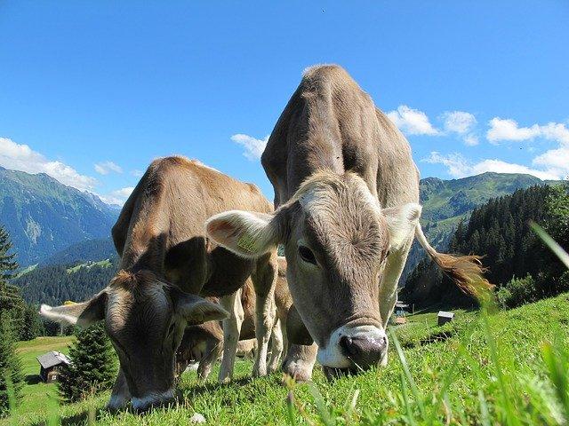 "cow | סקירה ""דוסיז צרכנות"""