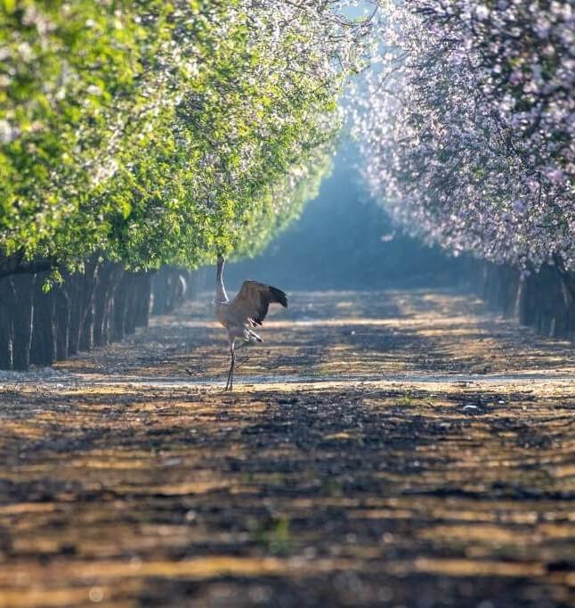 קנט, הקרן לביטוח נזקי טבע בחקלאות, מצדיעה לחקלאות הישראלית ומזמינה את הציבור לבחור את תמונת החקלאות הטובה ביותר לשנת 2021. סקירה דוסיז צרכנות
