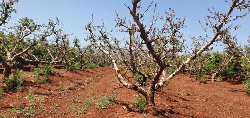 קנט, הקרן לביטוח נזקי טבע בחקלאות, מסכמת את נזקי מזג האוויר לחקלאות בחורף האחרון. סקירה דוסיז צרכנות