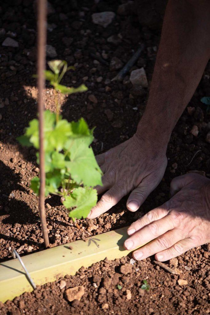 """La forêt blanche winery - צילום חי קיבנשטיין   סקירה """"דוסיז צרכנות"""""""