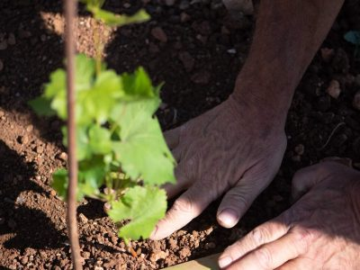 La forêt blanche winery - צילום חי קיבנשטיין | סקירה
