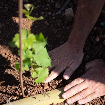La forêt blanche winery - צילום חי קיבנשטיין   סקירה